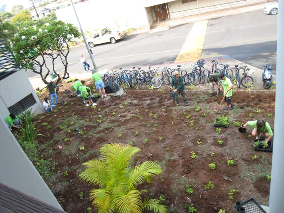 Brown today, green tomorrow, at UH Mānoa.