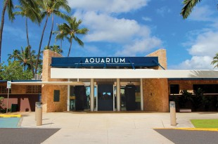 aquarium_front_larger