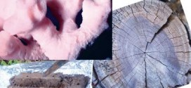 Corals, tree rings, and sediment cores