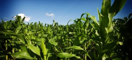 Predicting crop outcomes in a changing climate