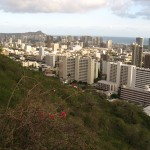Honolulu skyline and grass