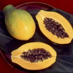 rainbow_papaya