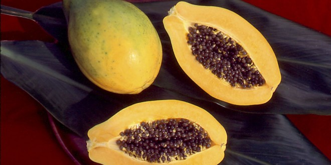 CTAHR scientists create new app to track papaya virus and GE papaya