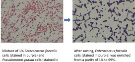 New cell sorting method developed by UH Manoa mechanical engineer