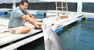 Whitlow Au at Hawaiʻi Institute of Marine Biology with dolphin BJ.