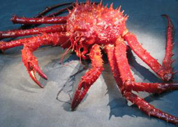 king crab on ocean floor
